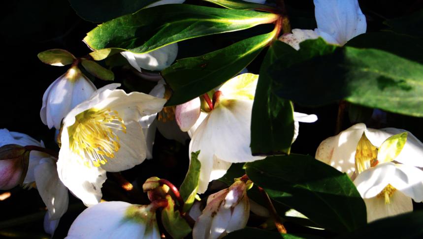 fiori preghiera