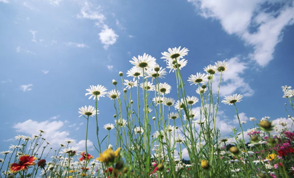 fiori di montagna