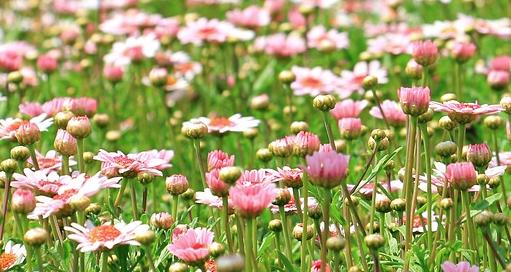 prato e fiori