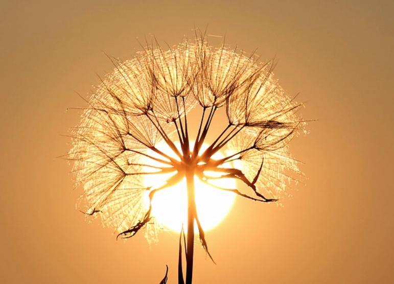 Sole e fiore
