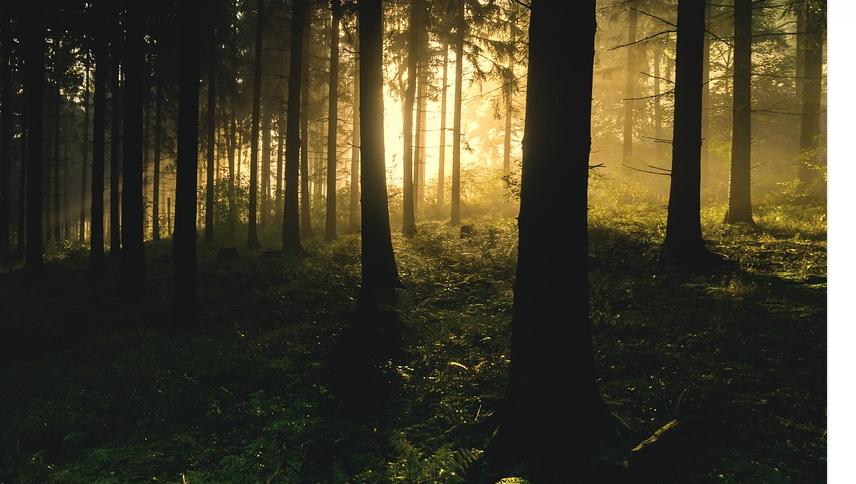 luce e foresta