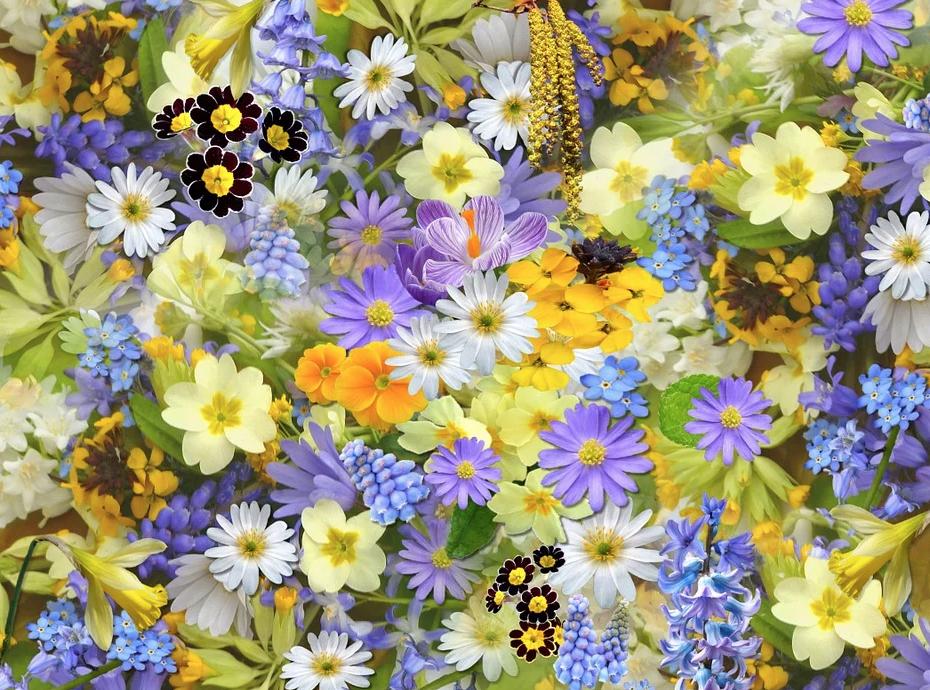 Tanti fiori