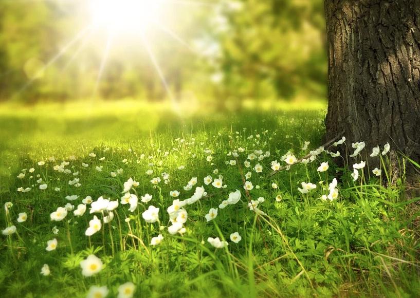 bosco e sole