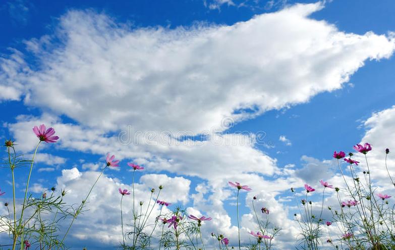 fiori e nuvole