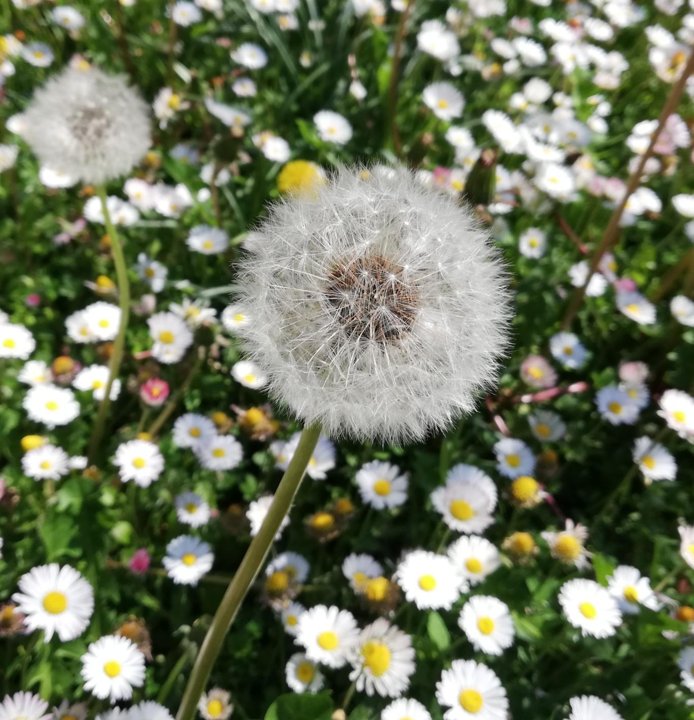 fiore don gianni
