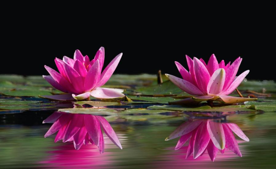 coppia di fiori